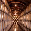 El Vino, tradición y vanguardia | visita a Bodegas Protos